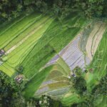 Managing the Food System's Main Asset: Land