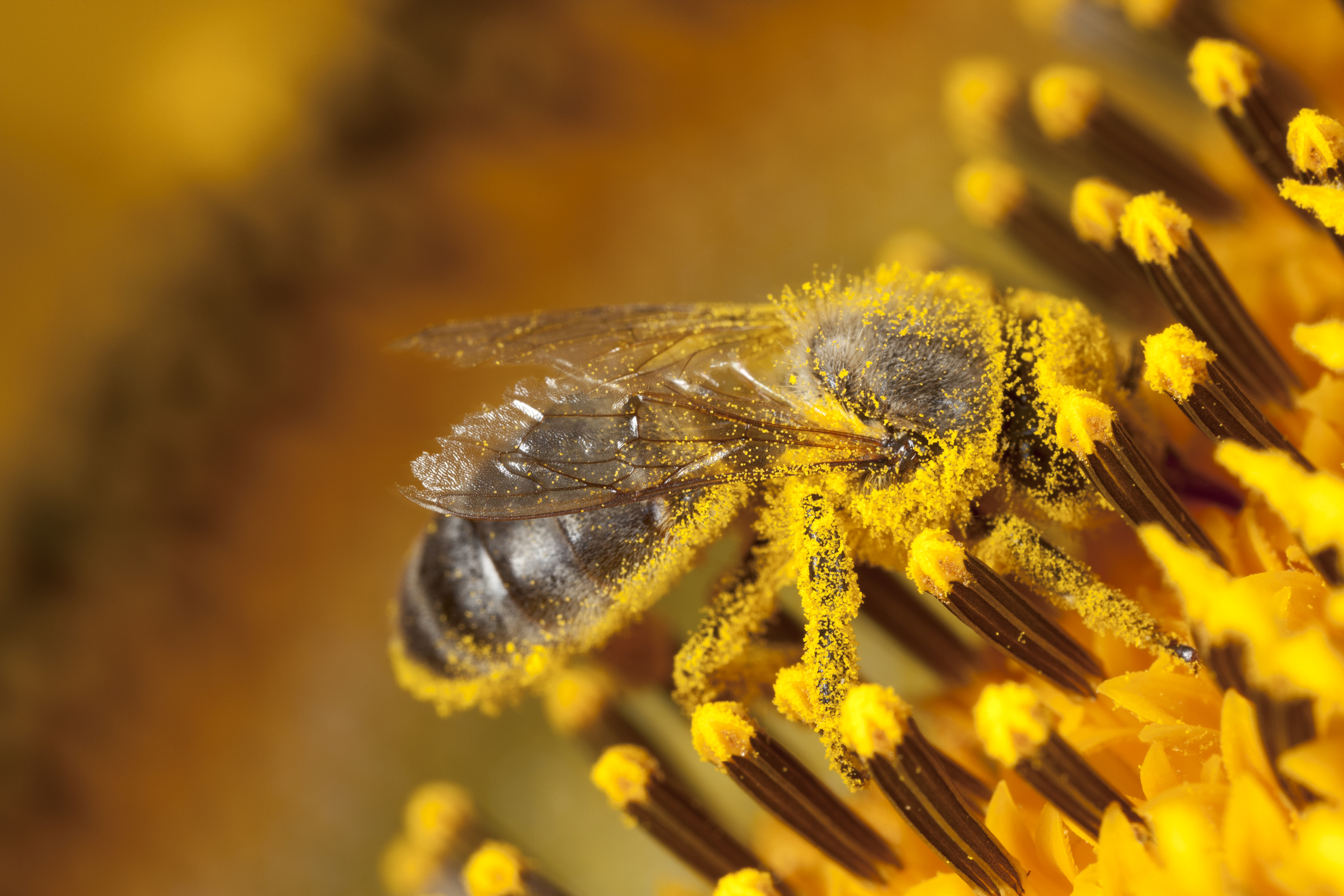 Paving the way for more pollinators