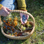 A gastronomic take on sustainable food research