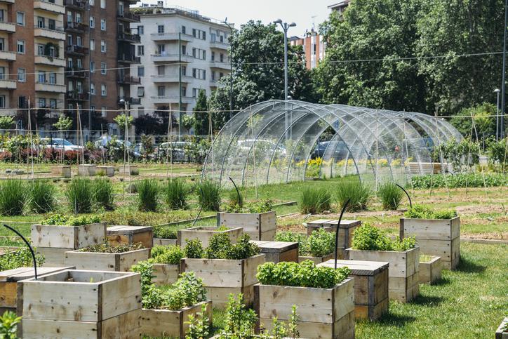 Gastronomic landscape: a urban farm in Milan, Italy